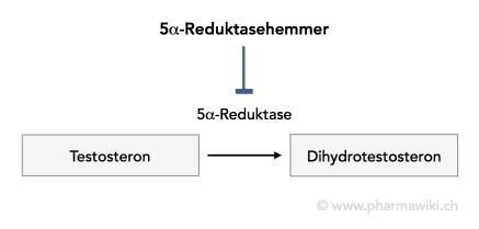 dihydrotestosteron prostata