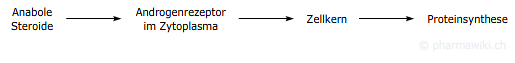 anabol wiki
