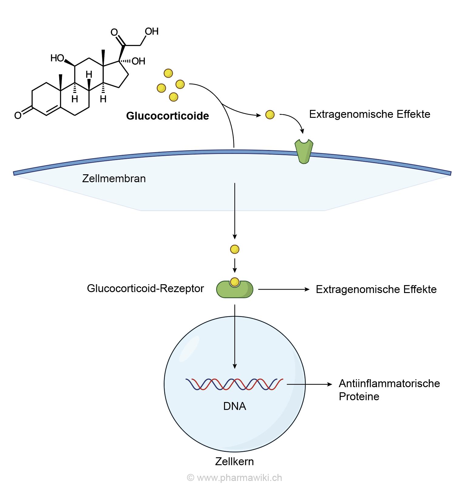 Nebenwirkungen nasonex cortison nasenspray Beipackzettel von