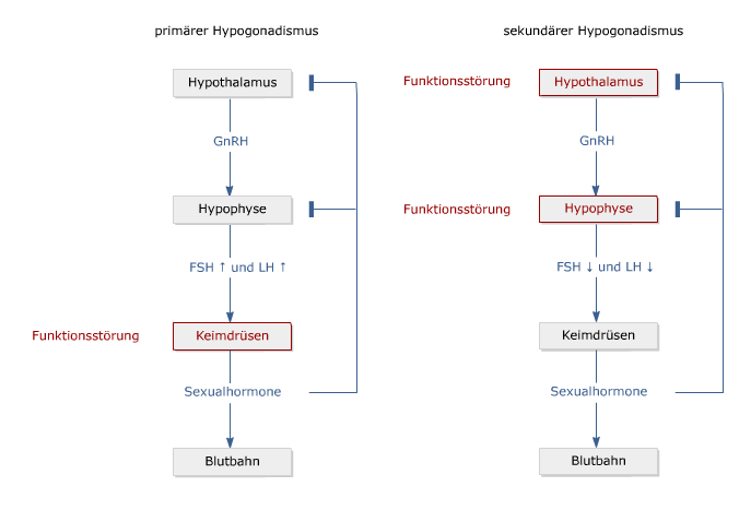 Hypogonadismus_1.png
