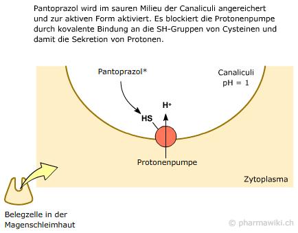 helicobacter pylori infektion darm