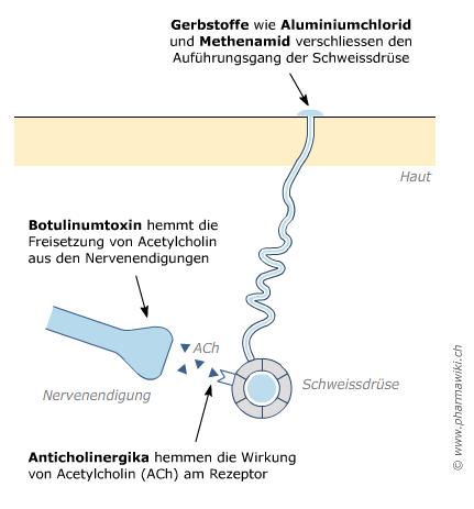 PharmaWiki - Starkes Schwitzen  PharmaWiki - St...